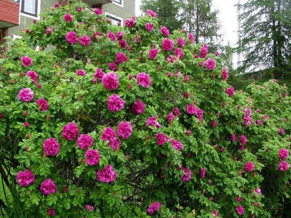 Домашние растения самые красивые и популярные (50